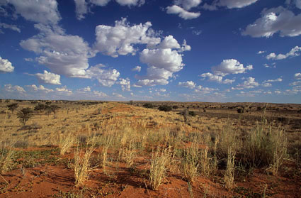 Kalahari Northern Cape South Africa